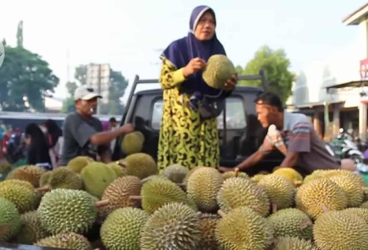 Pasar Ngabul Jepara Pusat Buah Durian Di Jepara Isjtv Com